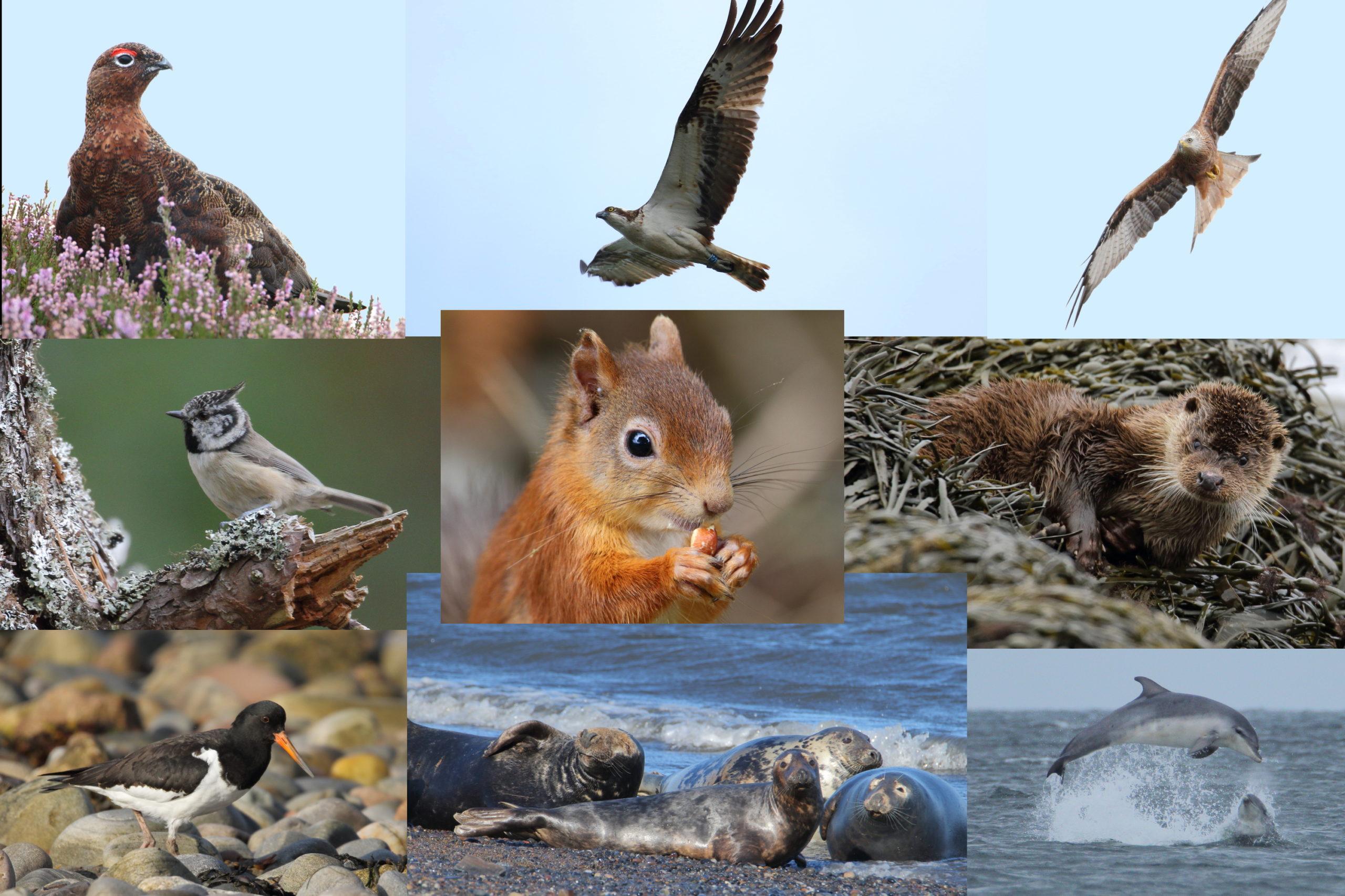 wildlife around Hiddenglen, Nairn